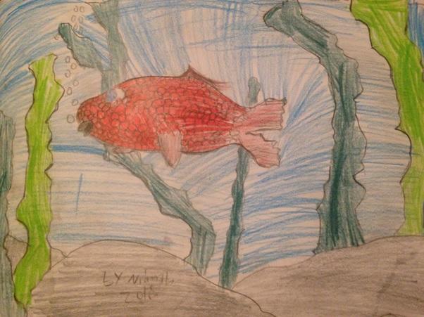NIamh's fish